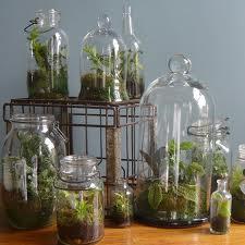 Бизнес идея - Выращивание растений в бутылке